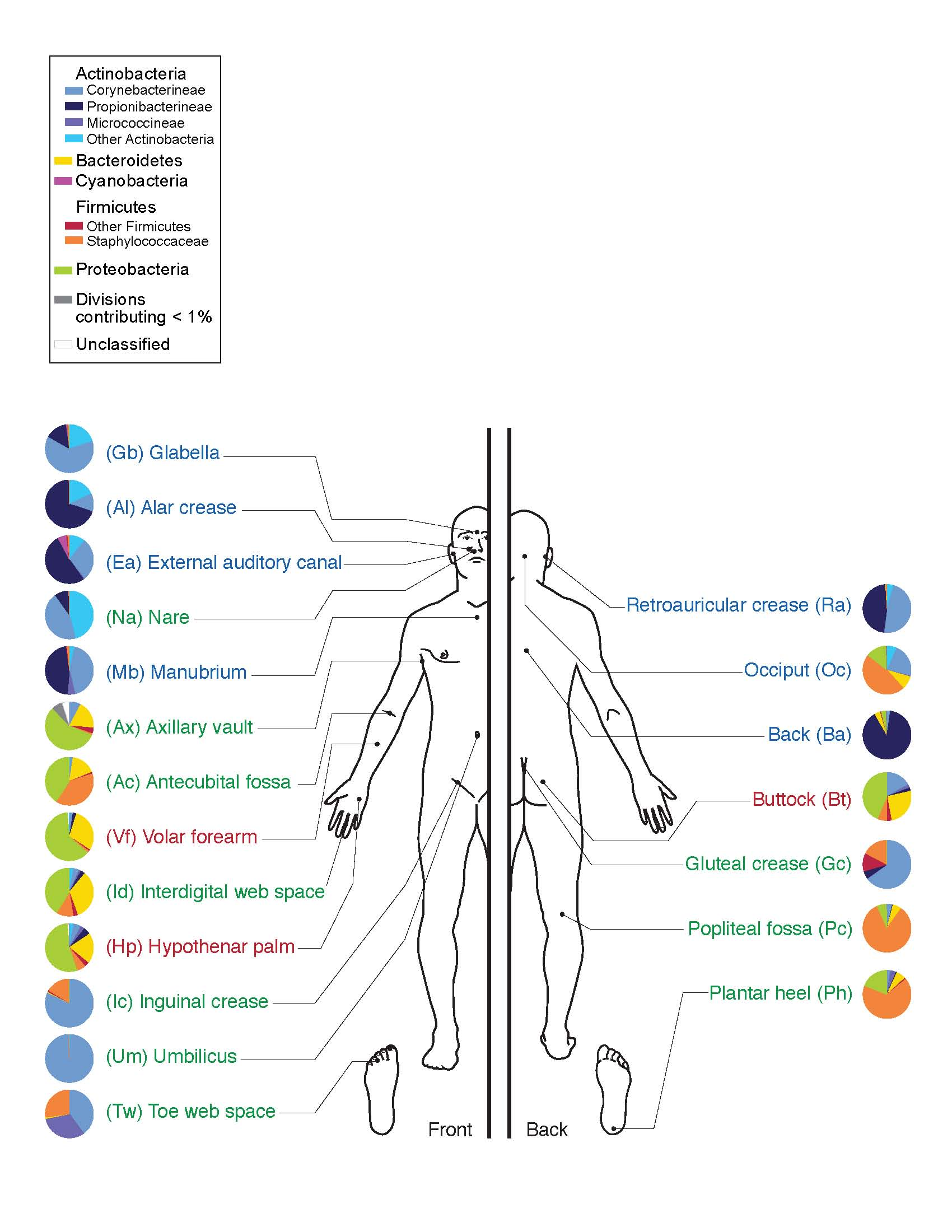 The various places that bacteria on your body might specialize