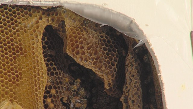 Colony of 40,000 bees found inside bedroom wall   KSL.com