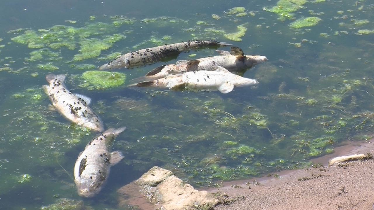 Heat low water levels kill 600 fish at strawberry for Strawberry reservoir fishing