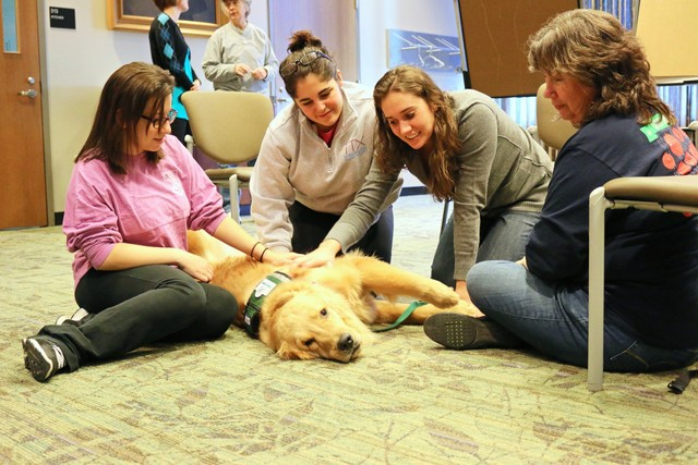 Therapy Dogs United  Dogs Rule in School