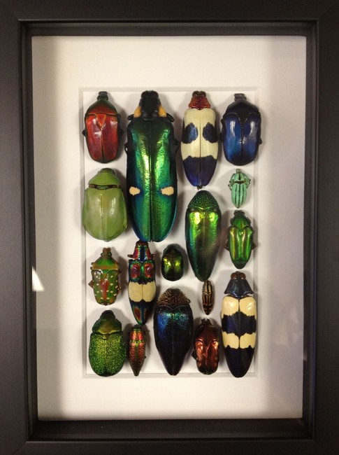 Midvale store creates bug art, jewelry