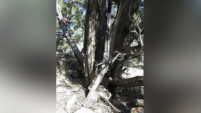 1882 Winchester rifle found in Great Basin National Park ...