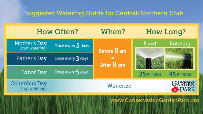 watering tips for a healthier lawn  ksl, Natural flower