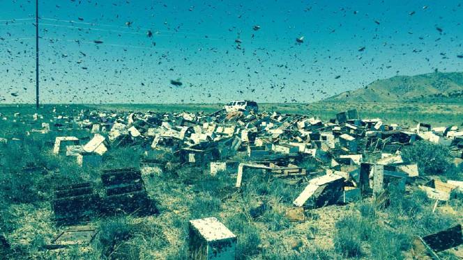 Bee_Swarm.jpg