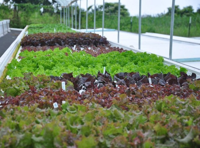 New local company to grow deliver fresh produce year for Aquaponics hawaii