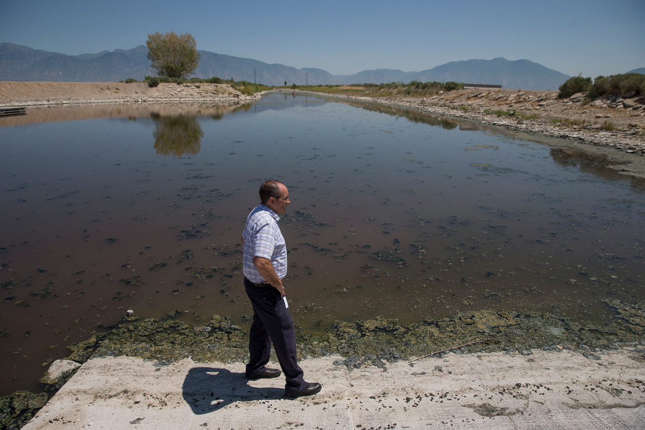 Algal bloom appears to be waning