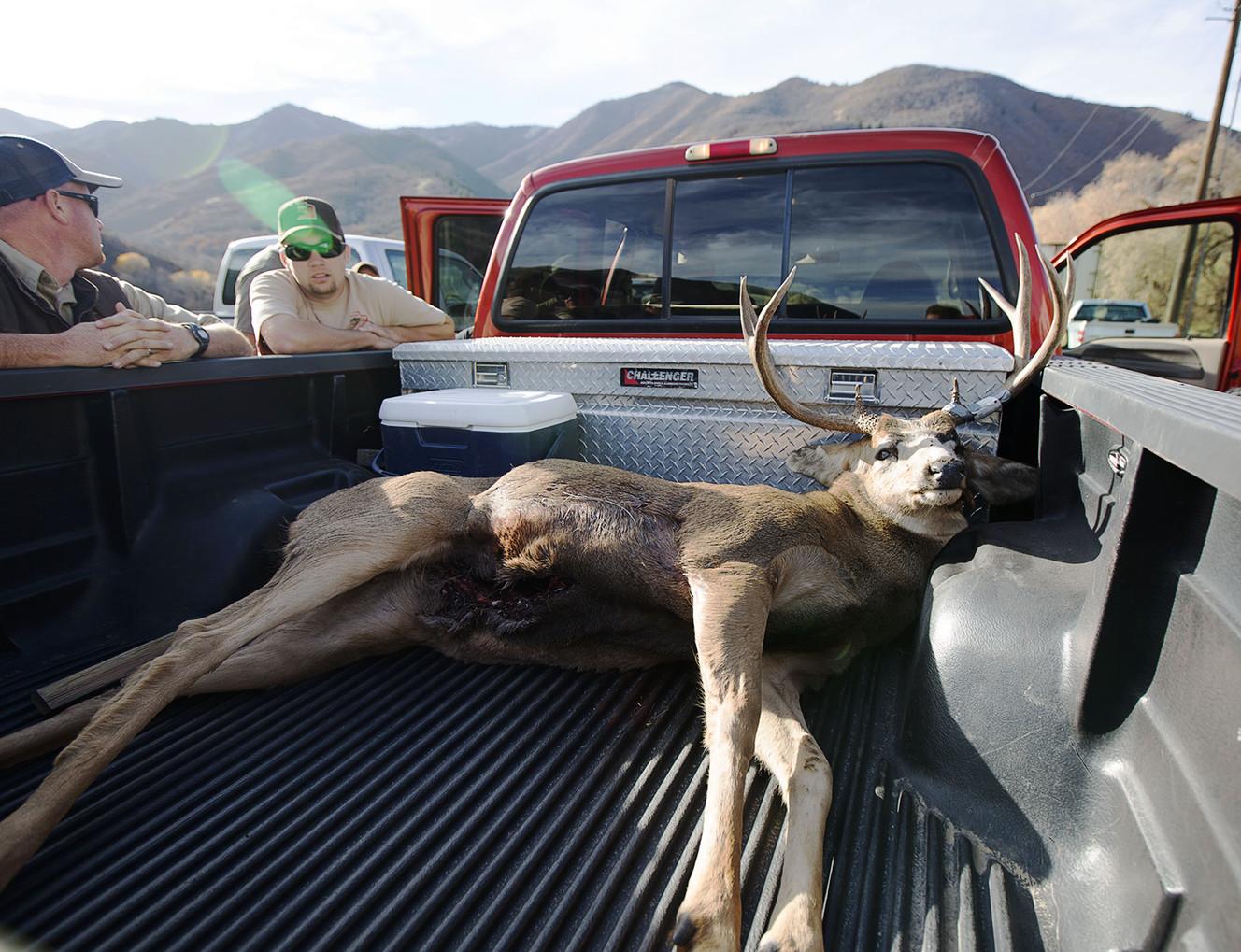 Deer hunting season officially underway in Utah