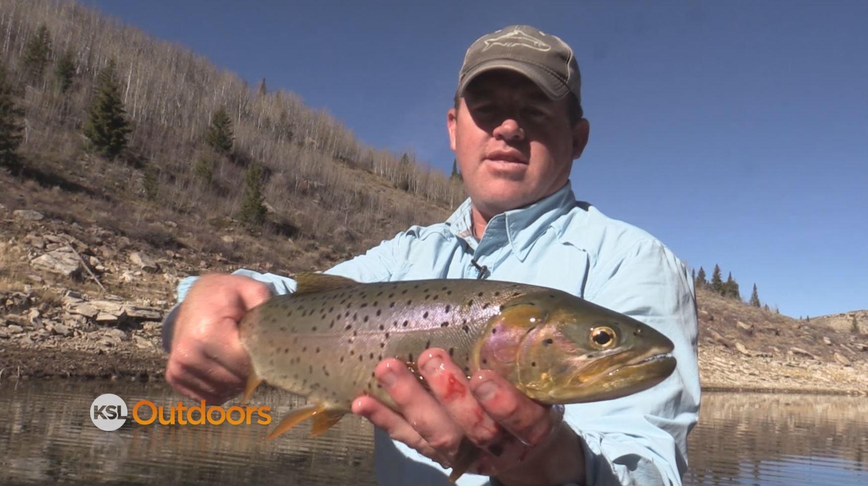 Ksl outdoors fall fishing at strawberry reservoir and for Strawberry reservoir fishing