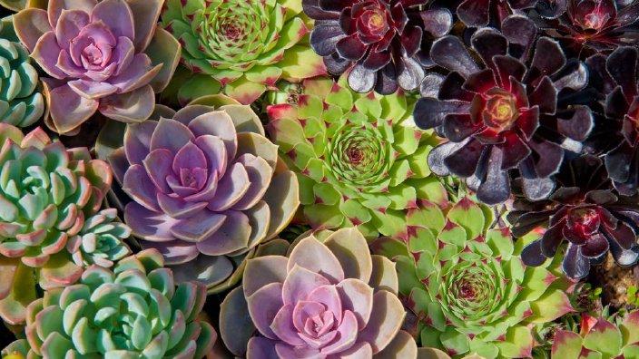 succulents2.jpg