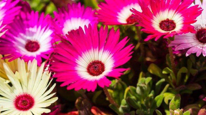 flowerslowwater.jpg