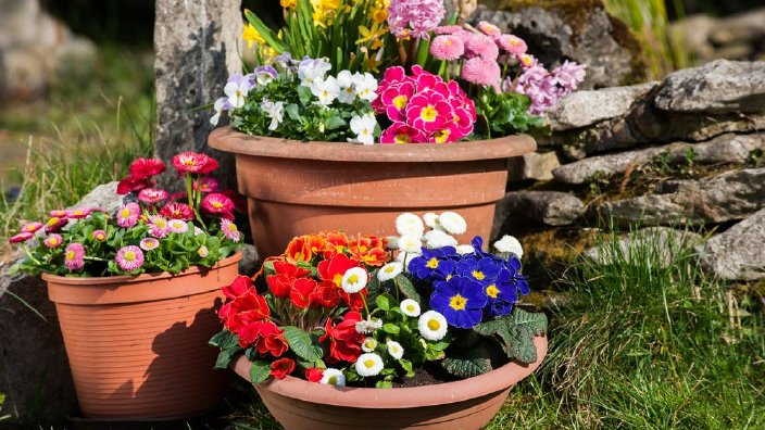 flowerspots.jpg