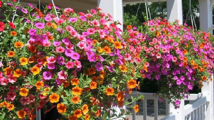 Hanging_Baskets.jpg
