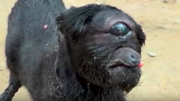 Have You Seen This? Real life cyclops goat | KSL.com