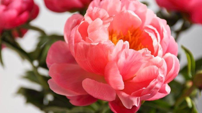 flowerspeonies.jpg