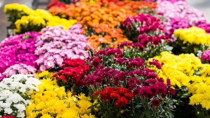 flowersmums.jpg