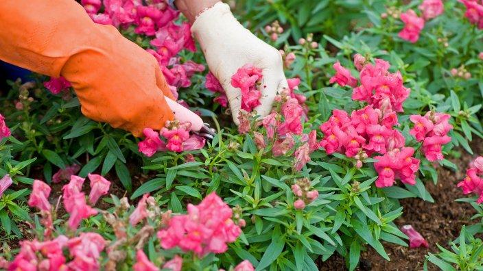 fall_gardening2.jpg