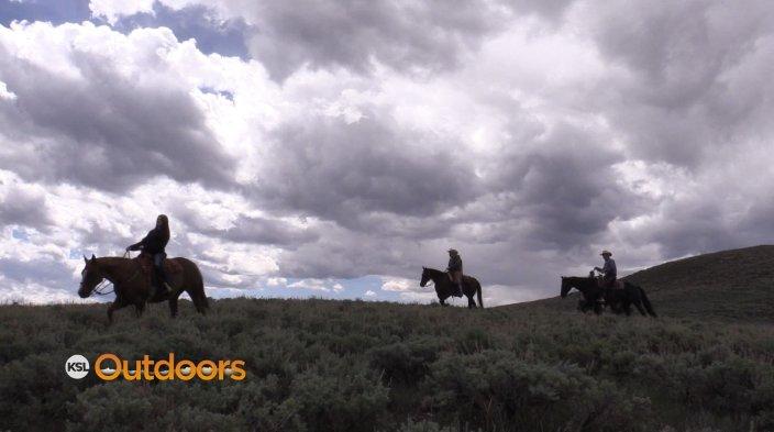 horse_pic.JPG
