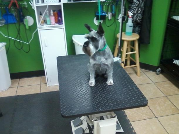 Hollys happy hounds dog grooming other animal services ksl local swipe to see click to see 12 photos solutioingenieria Image collections
