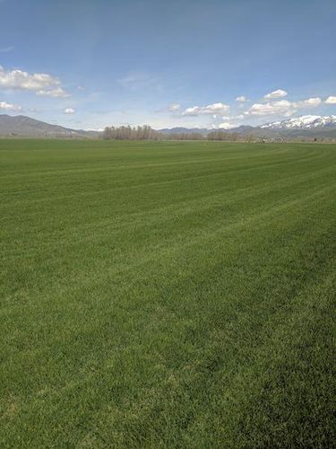 DROUGHT TOLERANT SOD for sale in Malad City , ID