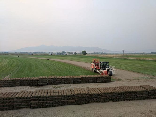 DEEP DARK LUSH GREEN SOD for sale in Malad , ID