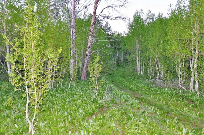 115 acres of rare mountain ranch property. $7660 an acre for sale in Huntsville , UT
