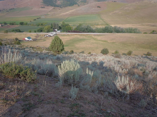 118.09 ACRES FOR SELL IN FRANKLIN COUNTY MINK CREEK IDAHO for sale in Preston , ID