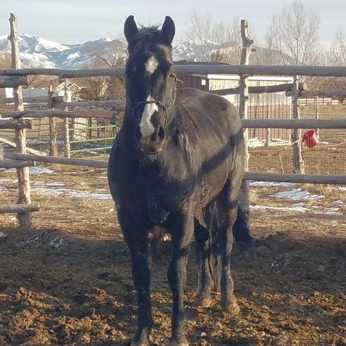Dry Speck Dry / double bred Dry Doc for sale in Tooele , UT