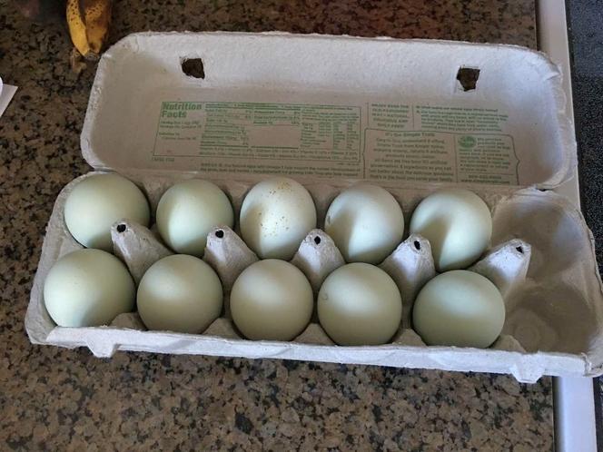 Fertile barnyard mix eggs for sale in Bluffdale , UT