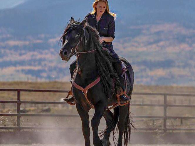 At Stud - Purebred Friesian Stallion ARMANI LRF. for sale in Telluride , CO