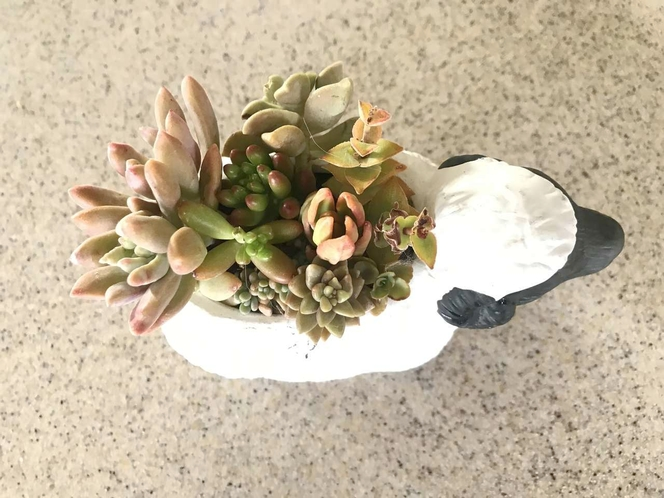 Real succulents in sheep planter for sale in West Jordan , UT