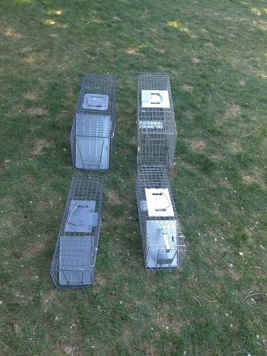 Havaheart traps for rent for rent in Roy , UT