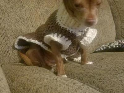 Family dog is missing- brown Chihuahua-