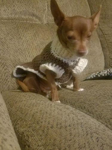 Family dog is missing- brown Chihuahua-  wanted in Mantua , UT