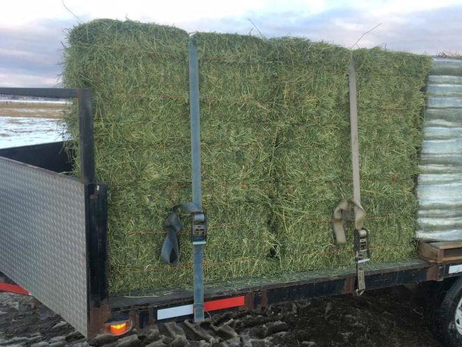 Premium Alfalfa Hay for sale in West Bountiful , UT