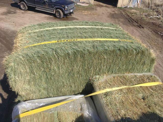 3x4x8 Fescue Grass  for sale in West Bountiful , UT