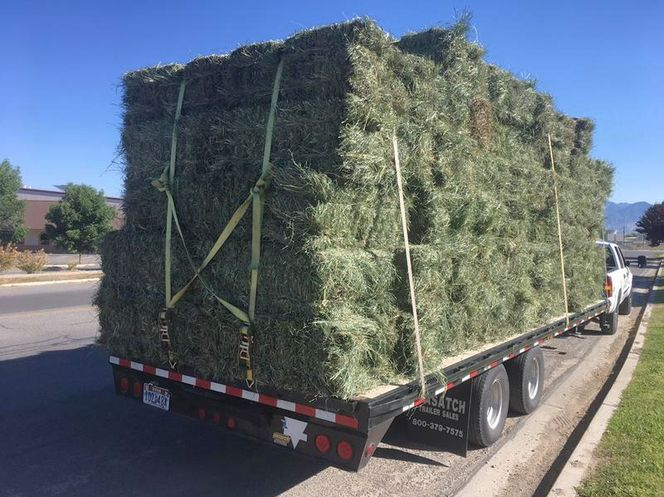 Orchard/Timothy Grass Mix for sale in West Bountiful , UT