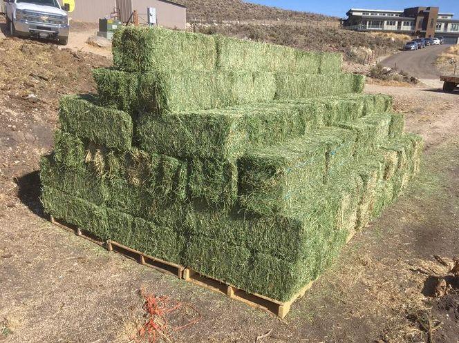 Alfalfa Hay for sale in West Bountiful , UT