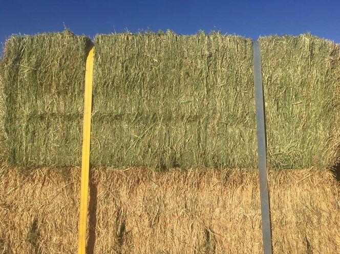 3x4x8 Fescue Grass/Alfalfa Mix  for sale in West Bountiful , UT