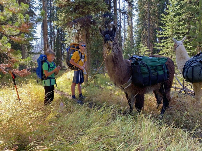 Pack Llamas for rent for sale in Provo , UT