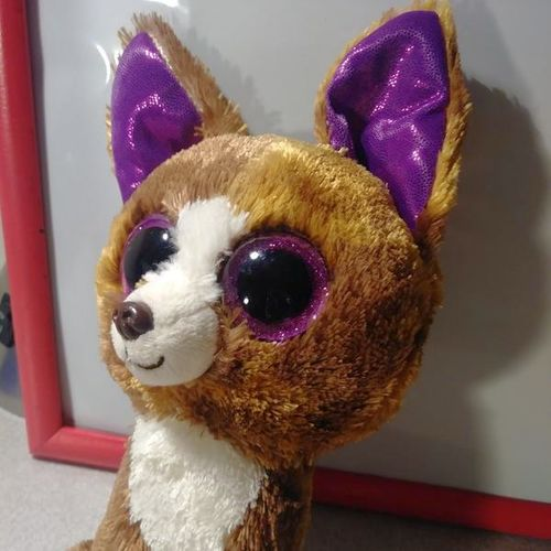 Adorable Little Coyote Bennie Boo for sale in Provo , UT