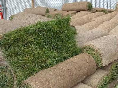 It's Sod Season
