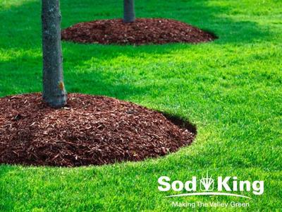 🥇MULCH - High Quality Mulch Delivered