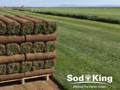 🥇SOD - KING BLUE™️ - Quality Kentucky Bluegrass