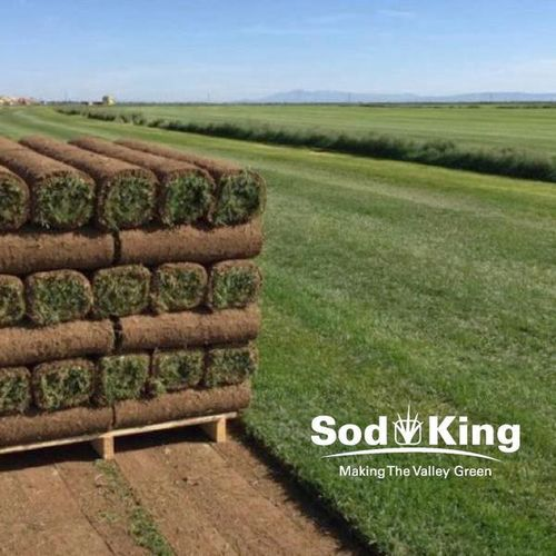 🥇SOD - KING BLUE™️ - Quality Kentucky Bluegrass for sale in Salt Lake City , UT