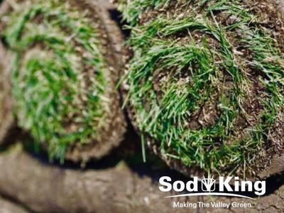 🥇SOD - KING BLUE™️ - Fresh Cut Sod Delivered