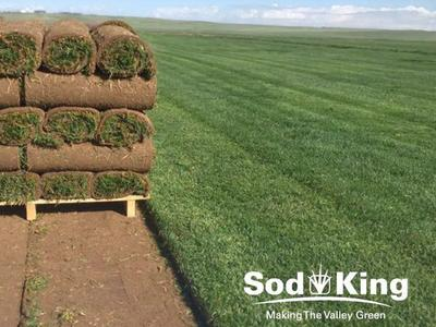 🥇SOD - KING BLUE™️ - Premium Kentucky Bluegrass