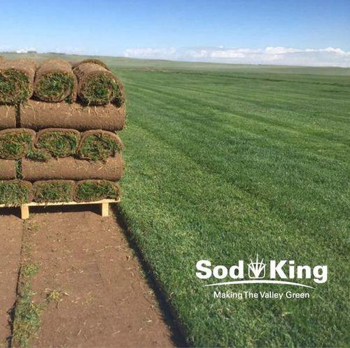 🥇SOD - KING BLUE™️ - Premium Kentucky Bluegrass for sale in Salt Lake City , UT