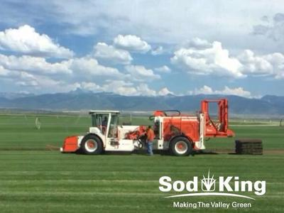 🥇SOD - KING BLUE™️ - Delivered Direct From Farm