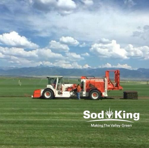 🥇SOD - KING BLUE™️ - Delivered Direct From Farm for sale in Salt Lake City , UT