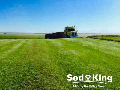 🥇SOD - KING BLUE™️ - Kentucky Bluegrass Delivered
